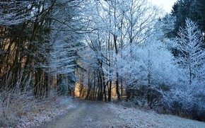Картинка зима, дорога, лес, деревья