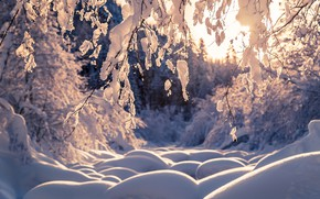 Картинка зима, лес, снег, деревья, ветки, природа, сугробы, Thomas Zagler