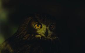 Картинка dark, close-up, animals, eyes, feathers, animal, owl, wildlife, yellow-orange