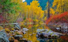 Картинка осень, лес, вода