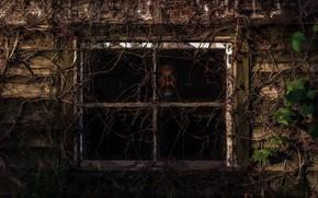 Картинка дом, человек, окно
