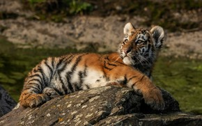 Картинка взгляд, природа, тигр, поза, камни, фон, отдых, малыш, лежит, дикая кошка, тигренок, тигрёнок