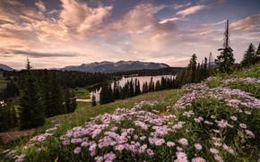 Картинка поле, лес, лето, небо, облака, пейзаж, цветы, горы, природа, озеро, река, склоны, вид, красота, даль, ...
