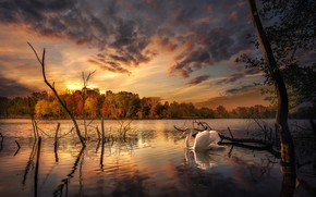 Картинка осень, лес, пейзаж, природа, озеро, птица, берег, лебедь