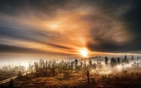 Картинка осень, лес, закат, туман