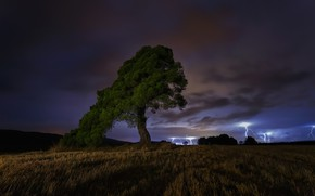 Картинка гроза, ночь, дерево, night, tree, thunderstorm, Paco Herrero