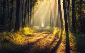 Картинка дорога, лес, лучи, свет, тень, light, road, rays, shadow, forrest, Tomczak Michał