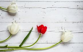 Картинка цветы, тюльпаны, red, white, белые, wood, flowers, tulips