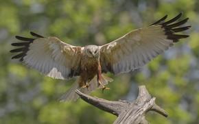 Картинка фон, птица, крылья, DUELL ©
