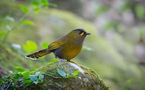 Картинка птица, камень, мох, птаха