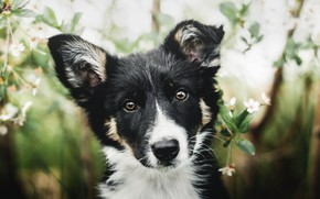 Картинка взгляд, морда, черно-белый, портрет, собака, щенок