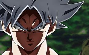 Картинка взгляд, парень, Dragon Ball, Драконий жемчуг