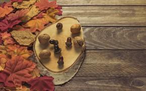 Картинка осень, листья, фон, colorful, доска, wood, желуди, background, autumn, leaves, осенние, maple