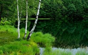 Картинка зелень, лес, озеро, берег, растительность