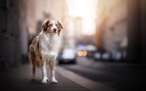Картинка город, друг, собака
