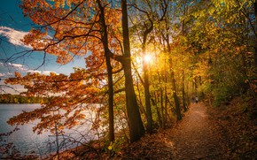 Обои осень, деревья, озеро, парк, тропинка