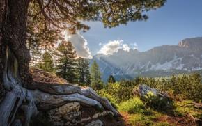 Картинка деревья, горы, корни, дерево, Италия, Доломитовые Альпы, Сергей Быков