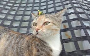 Картинка котёнок, кошечка, Meduzanol ©