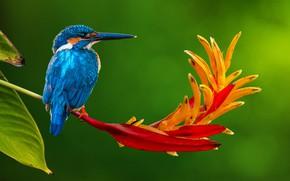 Картинка цветок, природа, тропики, птица, стебель, зимородок