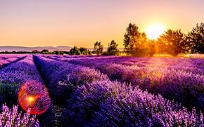 Картинка Nature, Sunset, Lavander, Field