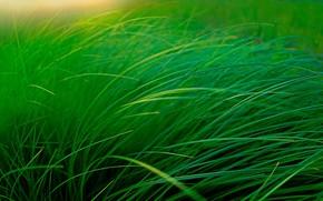 Картинка трава, макро, стебель