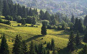 Картинка Луга, Деревья, Склоны, Травы, .Лес