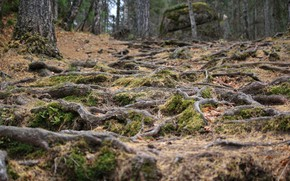 Картинка дерево, скалы, Корни