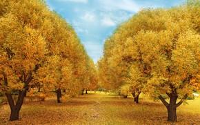 Картинка осень, лес, листья, деревья, парк, forest, nature, yellow, park, autumn, leaves, tree