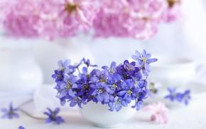 Картинка цветы, букет, ваза, hepatica