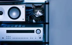 Картинка кошка, кот, взгляд, уют, дом, музыка, серый, фон, голубой, техника, динамики, полка, лежит, полосатый, мордаха, …