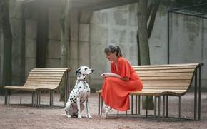 Картинка девушка, собака, скамья