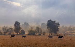 Картинка поле, осень, лес, свет, деревья, пейзаж, горы, природа, туман, холмы, забор, кони, утро, лошади, пастбище, ...