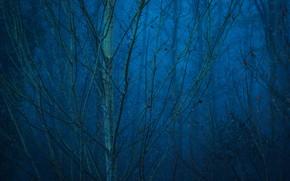 Картинка лес, деревья, природа, туман, Германия, сумерки, Mechernich
