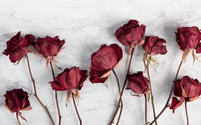 Картинка wallpaper, red, flowers, blur, roses, white background, stems, dry, dried, 4k ultra hd background