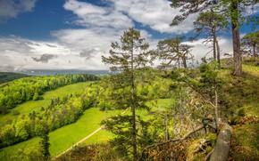 Картинка лето, природа, гора