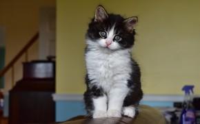 Картинка кошка, взгляд, уют, дом, котенок, фон, диван, стена, черно-белый, мебель, пушистый, дверь, милый, котёнок, мордашка, ...