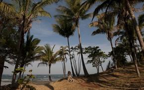 Картинка песок, море, пляж, лето, небо, солнце, пальмы, берег, summer, beach, sea, seascape, beautiful, sand, paradise, ...