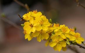 Картинка цветы, фон, ветка, весна, желтые, цветение