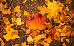 Картинка осень, лист, парк, листва, клен, кленовый лист