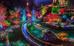 Картинка огни, Канада, Рождество, Британская Колумбия, остров Ванкувер, Butchart Gardens, Сады Бутчартов, группа ботанических садов, Брентвуд-Бэй