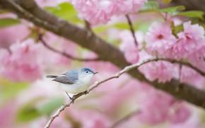 Картинка цветы, птица, весна, сад, голубая комароловка