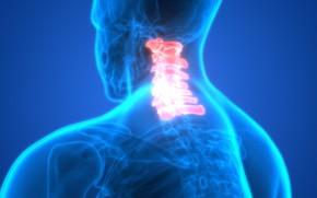 Картинка pain, bones, neck, human figure, discomfort, vertebrae