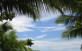 Картинка Небо, Тропики, Пальмы, Sky, Palm Trees, Tropics