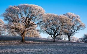 Картинка иней, деревья, утро