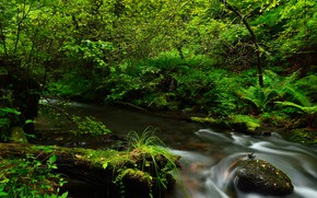 Картинка зелень, лес, ручей, камни, мох, кусты