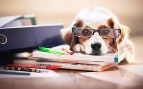Картинка друг, собака, очки