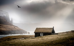 Картинка море, туман, дом, птица, берег, Исландия