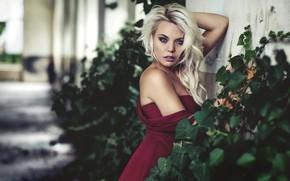Картинка взгляд, поза, модель, портрет, макияж, платье, прическа, блондинка, красотка, стоит, кусты, боке, у стены, Zancan …