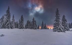Картинка небо, облака, снег, сияние, Деревья, ёлки, Гора Витоша