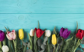 Картинка цветы, colorful, тюльпаны, flowers, beautiful, tulips, spring, multicolored